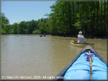 Canoeists enjoying a beautiful day on the Cache River